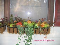 window boxes ideas | Barnnumber2 : Fall Window box decor