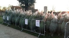 Christmas trees now on sale