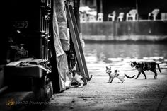 http://www.veedophotography.com/129-of-365project-the-art-of-street-photography-tai-o/