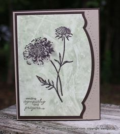 Polished Stone--Field Flowers, Petite Pairs    Paper: Glossy White, Early Espresso, Crumb Cake    Ink: Crumb Cake, Certainly Celery, Early Espresso    Accessories: Adorning accents edgelits, paper piercing template, brayer, clear envelope
