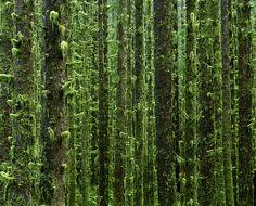 amazing rainforest photo