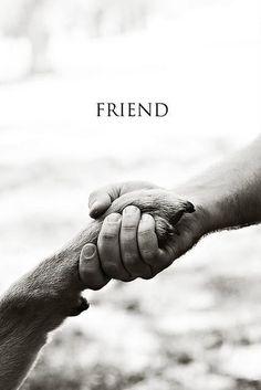 dog, friend, living free animals