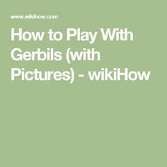 How to Play With Gerbils (with Pictures) - wikiHow