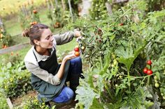 Get Natural Solutions For Your Health Problems Gardening For Beginners, Gardening Tips, Vegetable Garden Tips, Natural Solutions, For Your Health, Natural Treatments, Shade Garden, Hula, Health Problems