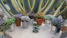 collection of succulent wedding favors Succulent Wedding Favors, Wedding Stuff, Wedding Ideas, Potted Plants, Pots, Cactus, Collections, Garden, Beautiful