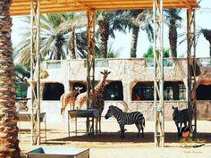 The animals strolling at The Emirates Park Zoo  #travel #travelblog #traveldiaries #igers #iphoneonly #instapic #instatravel #traveldiary #travelgram #travelpost #traveltheworld #wanderlust #wanderer #winterholidays #travelblogger #traveluae #dubaitravelblogger #dubai #dubaipage #mydubai #uae #inuae #india #theshazworld #emiratesparkzoo #emiratesparkresort #abudhabi #summerholiday #simplyabudhabi