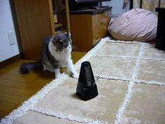 ネコにメトロノームを見せた結果…仕草が超かわいすぎた