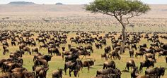 9 days Tarangire,Ndutu,Serengeti & Ngorogoro Crater | Moonlight Tours Expedition | Pulse | LinkedIn
