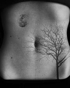 52 modèles de tatouage licorne ailé - 9 https://tattoo.egrafla.fr/2016/02/17/modele-tatouage-arbre-vie/