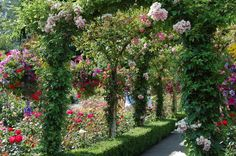 Rose Arbor by nan_hann @Flickr Creative Commons. - Pixdaus