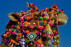 Brightly decorated camel at the Desert Festival, Rajasthan, India by Ben Beiske
