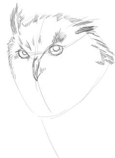 simple pencil drawings for beginners - Google Search