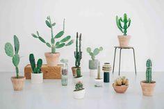 kaktus2.jpg