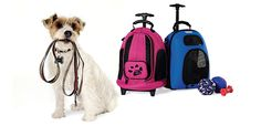 Bring your pet with you, in style & for less!