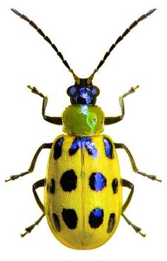 The Effective Pictures We Offer You About Arthropods insects A quality picture can Beetle Insect, Beetle Bug, Insect Art, Rhino Beetle, Cool Insects, Bugs And Insects, Cool Bugs, Bug Art, A Bug's Life