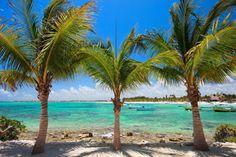 Akumal beach in Mexico. Palm trees at Akumal beach in Mexico , Snorkeling, Akumal Beach, Costa, Palm Trees Beach, Wall Murals, Wall Art, Quintana Roo, Beach Town, Dream Team