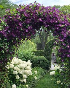 Purple Clematis, Clematis Vine, Garden Arches, Garden Entrance, Garden Cottage, Garden Features, Parcs, Dream Garden, Garden Paths