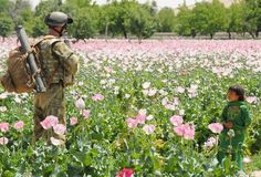 Australian troops confront tall poppies of Afghanistan