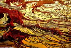 These rice fields are located on the slopes of Ailao Mountain, where the terraced levels help create flat surfaces along an uneven landscape. Description from abandone.worthytoshare.com. I searched for this on bing.com/images