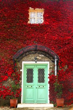 Beautiful mint colored doors, red foliage climbing vines...