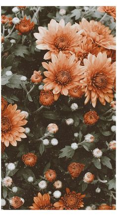 iphone wallpaper vintage flowers nature