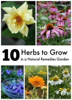 10 Herbs to Grow in a Natural Remedies Garden herbsandoilshub.c...  Jan really hit a home run here. She shares 10 herbs you can grow and use for natural remedies. She provides information about the medicinal benefit of each herb, where to buy seeds or plants, and recipes that use each herb. These are recipes you can make at home. If you like herbal remedies, this post is a keeper.