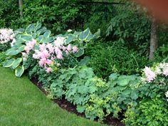 Shade border- alchemilla, astilbe, hosta (with chartreuse), broadleaf evergreen behind with shrubs/ small tree