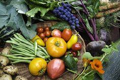 食べ物の質や成分にこだわるあまり、特定の食品の下調べや調理に1日3時間以上といった過度の時間を費やしてしまう、不健康な食品を食べた後に罪悪感を覚えてしまうなどがある。栄養の不均衡、または日常生活への支障につながるそうした食べ物への固執はオルトレキシアと考えられる。完全菜食主義――B12など一部のビタミンは動物性食品に含まれている