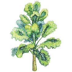 Herbář — Česká televize — Herbář — Česká televize Herbs, Plants, Herb, Plant, Planets, Medicinal Plants