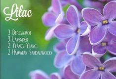 Essential oils have so many amazing benefits, but sometimes we just want to use them because they smell so good. These diffuser blends will make your house smell simply amazing! Sandalwood Essential Oil, Essential Oil Perfume, Essential Oil Diffuser Blends, Doterra Oils, Doterra Essential Oils, Aromatherapy Diffuser, Lemongrass Essential Oil, Lavender Oil Benefits, Elixir Floral