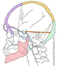 намет мозжечка - проекция на череп