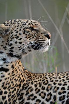 Leopard princess by Leah Sullivan