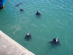 Sea-lions in Howth, Ireland