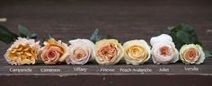 Peach Rose Color Study: Versilia is my favourite Juliet Garden Rose, Garden Roses, Juliet Roses, Garden Rose Bouquet, Bouquet Flowers, Bouquets, Peach Flowers, Colorful Flowers, Beautiful Flowers