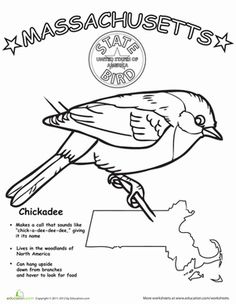 53 best ss massachusetts images 50 states massachusetts united Massachusetts State Tree first grade animals life science worksheets massachusetts state bird bird coloring pages coloring sheets