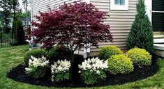 17 Landscaping ideas for the small front yard, with which you can define your curb appeal., 17 Landscaping ideas for the small front yard, with which you can define your curb appeal Evergreen Shrubs, Small Front Yard Landscaping, Garden Design, Front Yard Landscaping Design, Outdoor Gardens, Yard Design, Landscape, Backyard, House Landscape