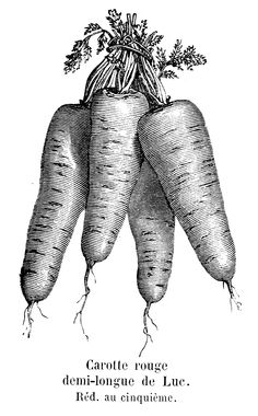 vintage vegetable clip art - Google Search