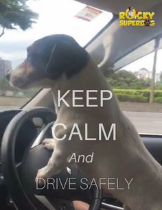 Keep calm buddy. I'm good at driving. Funny Pets, Funny Animals, Amazing Adventures, Keep Calm, Dogs, Stay Calm, Pet Dogs, Funny Animal, Relax