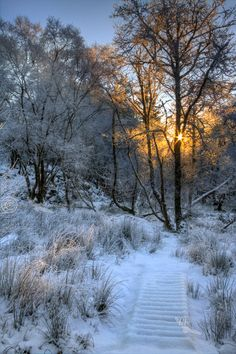 Winter Woodland. Ach nan darroch. North West Highlands. Scotland.