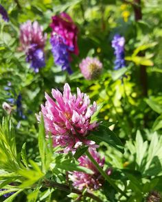 Valoisia kesäpäiviä sinulle  Elämän varjoista ja valosta ajatuksia blogissa  #uusiblogipostaus #newblogpost #linkkibiossa #linkinmybio #elämä #life #ajatuksia #thoughts #kukat #flowers #floras #flowerstagram #flowerpower #nature #naturelover #lifestyleblogger #nelkytplusblogit #åblogit
