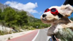 Dog Travel : How To Make The long Road Trip More Comfortable For Your Dog Tier Wallpaper, Dog Wallpaper, Animal Wallpaper, Computer Wallpaper, Wallpaper Ideas, Kawaii Wallpaper, Wallpaper Desktop, Funny Dogs, Cute Dogs