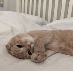 Cute Baby Cats, Cute Funny Animals, Cute Baby Animals, Kittens Cutest, Animals And Pets, Cats And Kittens, Cat Aesthetic, Beige Aesthetic, Japanese Aesthetic
