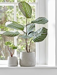 Home love Indoor Planters, Large Decorative Indoor Plant Pots, Indoor Flower Pots UK How To Buy Kid' Indoor Flower Pots, Indoor Plant Pots, Indoor Planters, Potted Plants, Rattan Planters, Rustic Planters, Plants On Window Sill, Window Ledge Decor, Nordic Furniture