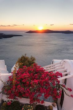 Red flowers and sunset view in Santorini Santorini Grecia, Santorini Island, Santorini Sunset, Vacation Places, Dream Vacations, Vacation Travel, Beautiful Places To Visit, Beautiful World, Beau Site