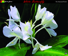 Found on Bing from www.pinterest.com White Butterfly, Guinea Bissau, African, Flowers, Plants, Plant, Royal Icing Flowers, Flower, Florals
