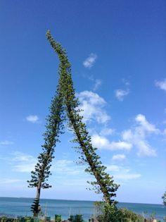 New Caledonia, Isle of Pines