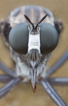 Compound Eyes!