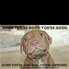 I just love bully dogs.