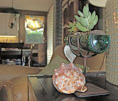 Wine Bottle Garden Kit // Live succulents by BottleGardens on Etsy, $25.95