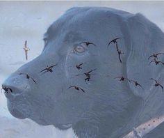 Hunting on the mind Duck Hunting Dogs, Hunting Stuff, Duck Season, Waterfowl Hunting, Bowfishing, Black Labrador, Black Labs, Hunting Season, Best Dogs